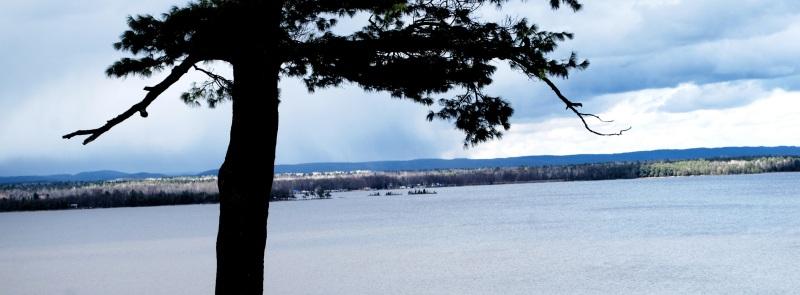 pine-river